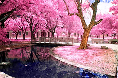 DIY Paint by Number Kits for Adults Kids Beginner - Cherry Blossom Trees Pink Flowers Lake Reflections 16x20 inch Cherry Blossom Flower Bead