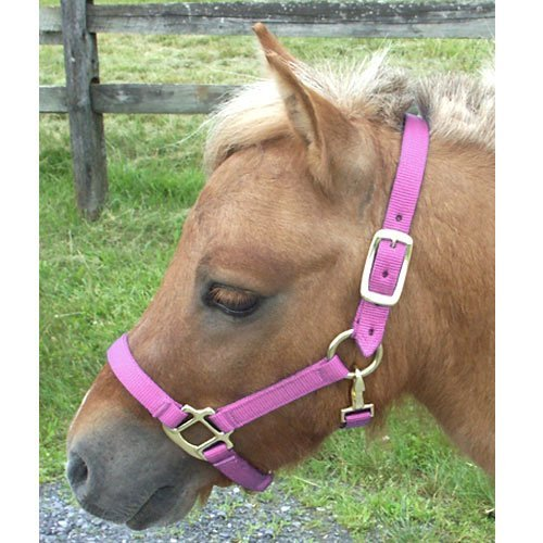 Intrepid International Nylon Miniature Horse Halter, Pink, Large
