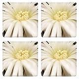 Liili Square Coasters Image ID 23020558 Flowering cactus Echinopsis Setiechinopsis mirabilis macro shot