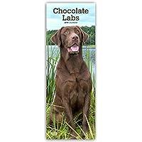 Chocolate Labrador Retrievers - Braune Labradore 2019 (Slimline-Kalender)
