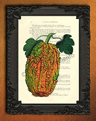 Warty pumpkin upcycled vintage dictionary art print, ornamental fruit kitchen wall poster, vegetables cooking artwork -