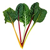 Swiss Chard Northern Lights Mix Seeds - Vegetable Seed Package - 1/4 lb. Package