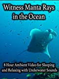 Witness Manta Rays in the Ocean 8 Hour Ambient Video for Sleeping and Relaxing with Underwater Sounds