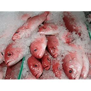 Wild Caught Fresh Caribbean Red Snapper 6 Lb. Avg