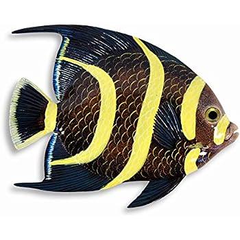 Amazon Com Lx Handpainted Tropical Fish Replica Wall