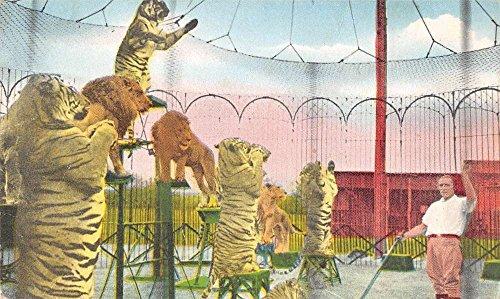 Hudson New Hampshire Benson Wild Animal Farm Antique Postcard J38893