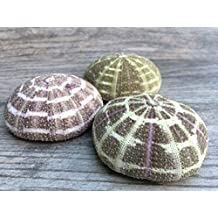 "Alfonso Sea Urchins | 3 Large Alphonse Urchin Shells 3""-4""