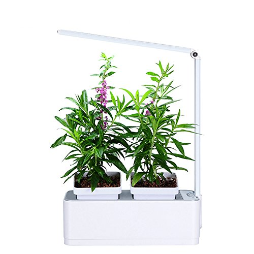 Growing Herbs Under Led Lights - 7
