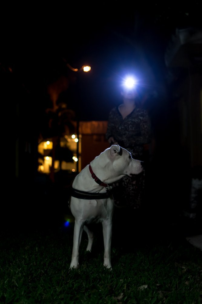 LED Headlamp Flashlight - Great for Camping, Hiking, Dog Walking, Kids. One of the Lightest (2.6 oz) Cree Headlight. Water & Shock Resistant with Red Strobe. Duracell Batteries Included. by Shining Buddy (Image #6)