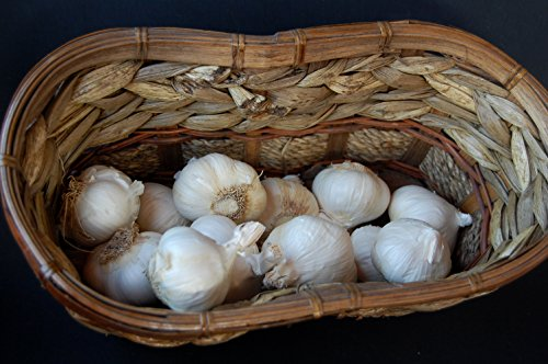 1+ Pounds Early Italian Purple Garlic Fresh Bulbs (Allium Sativum var. Ophioscorodon)