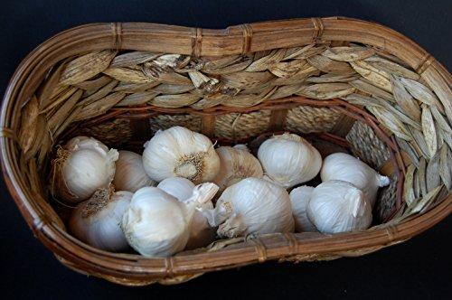 1+ Pounds Early Italian Purple Garlic Fresh Bulbs (Allium Sativum var. Ophioscorodon)