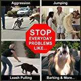 Don-Sullivan-Perfect-Dog-Fast-Results-Pet-Training-Package