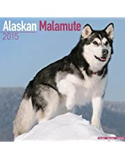 Alaskan Malamute Calendar - Just Alaskan Malamutes Calendar - 2015 Wall calendars - Dog Calendars - Monthly Wall Calendar by Avonside by MegaCalendars (2014-07-01)