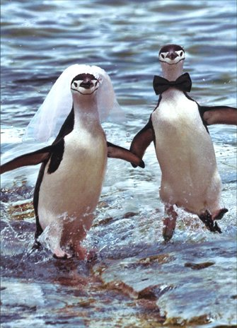 Two Penguins Running Wedding Card
