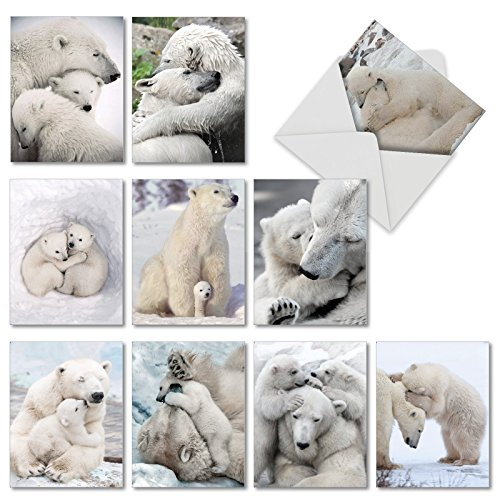 Bear Hugs: 10 Assorted Blank All Occasions Note Cards Featuring Polar Bears Loving and Cuddling, with Envelopes. AM6327OCB-B1x10 (Loving Hug)