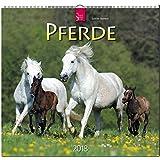 PFERDE: Original Stürtz-Kalender 2018 - Mittelformat-Kalender 33 x 31 cm