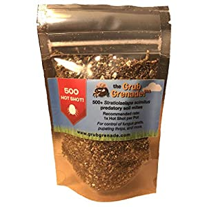 Grub Grenade – Beneficial Predatory Soil Mites – Natural Predators of Fungus gnats, Thrips pupae, diapaused Spider mite…