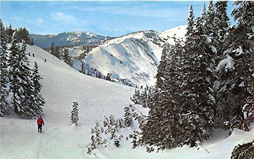 Hurricane Ridge Ski Area Olympic National Park, WA, USA Old Vintage Postcard Post Card