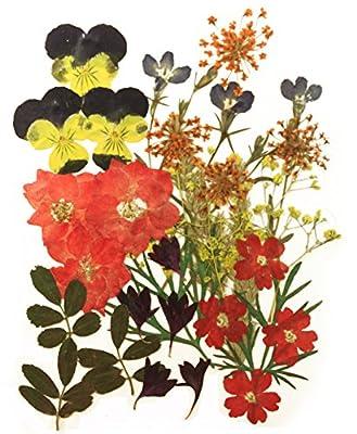 Pressed flowers mixed, pansy, larkspur, cornflower, alyssum, verbena, yellow baby breath, lobelia, foliage by Silver J