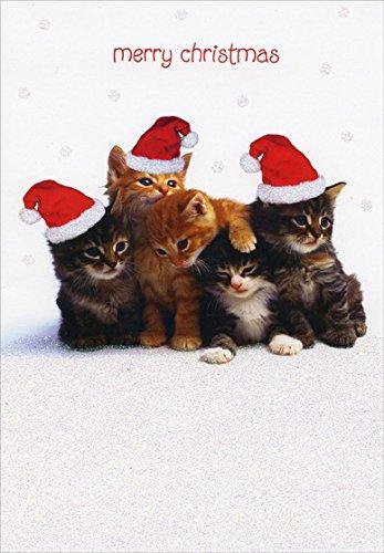 Kitten Christmas Cards.Bunch Of Kittens Designer Greetings Cat Box Of 18 Christmas Cards
