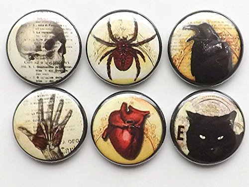 or Magnets skull anatomical heart black cat raven spider spooky scary goth gifts ()