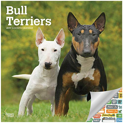 Bull Terriers Calendar 2019 Set - Deluxe 2019 Bull Terriers Wall Calendar with Over 100 Calendar Stickers (Bull Terriers Gifts, Office Supplies) ()