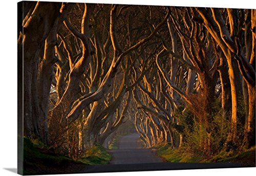 piotr-galus-gallery-wrapped-canvas-entitled-the-dark-hedges-in-the-morning-sunshine