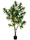 ONE 6' Outdoor Dracaena Reflexa Tree W/951 Lvs. In Plastic Pot Green
