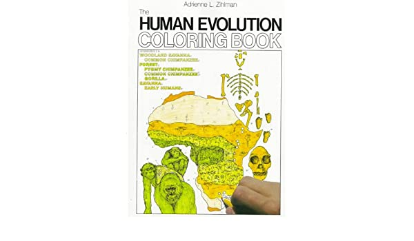 Amazon.com: The Human Evolution Coloring Book (College Outline ...