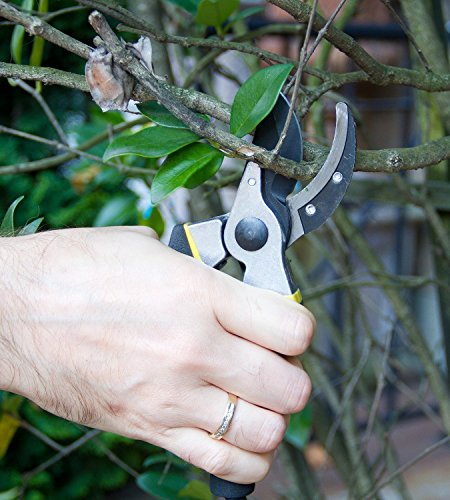 8'' Professional Garden Clippers, Branch Scissors & Rose Pruning Shears ,Hand Pruners with Ergonomic Handles, Shock-Absorbent Spring & Safety Lock ,Bypass Pruning Shears For Garden Maintenance (Black) by Lexza (Image #4)