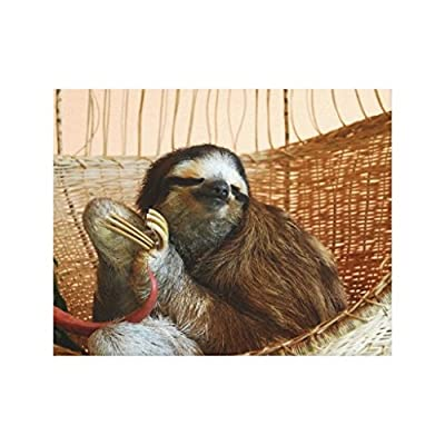 Filouda Sweet Sloth Animal Prints Unframed Canvas Painting Wall Art Decoration 12 By 16 Inch - Sloth Art