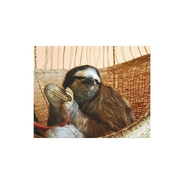 Filouda Sweet Sloth Animal Prints Unframed Canvas Painting Wall Art Decoration 12 By 16 Inch -