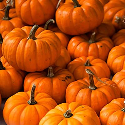 Pumpkin Garden Seeds - Jack Be Little - Non-GMO, Heirloom Pumpkins - Deep Orange - Vegetable Gardening Seeds
