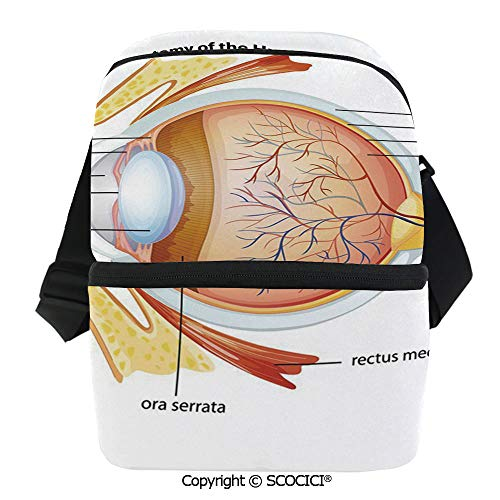 SCOCICI Reusable Insulated Grocery Bags Human Eye Anatomy Cornea Iris Pupils Optic Nerves Graphic Print Decorative Thermal Cooler Waterproof Zipper Closure Keeps Food Hot Or Cold