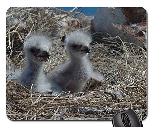 Mouse Pad - Bald Eagles Chicks Birds Nest Wildlife - Bald Chicks