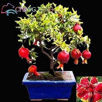 20pcs / bag semillas de granada Mini Bonsai Semillas de Plantas deliciosa de la fruta grande
