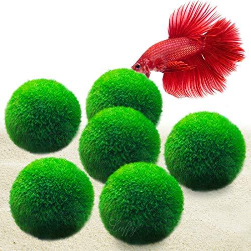 6 LUFFY Giant Marimo Moss Balls (1.5