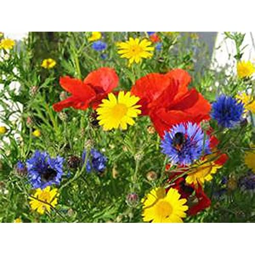 WILDFLOWER SEED MIX , ASSORMENT OF PERENNIAL & ANNUAL , 1