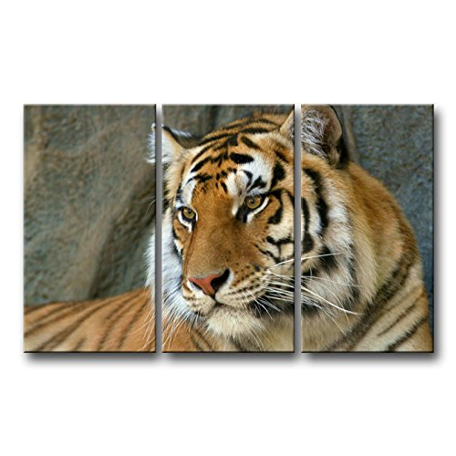 - So Crazy Art 3 Piece Wall Art Painting Bengal Tiger Face Close Up Prints On Canvas The Picture Animal Pictures Oil For Home Modern Decoration Print Decor