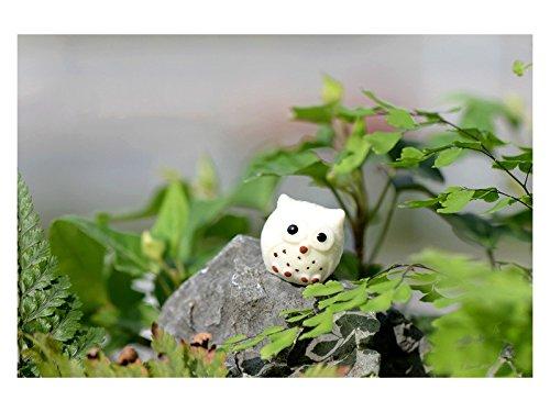 Junson Cute Miniature Micro Landscape Owl Ornaments DIY Outdoor Garden Decor Home Gift (White) for Decoration