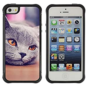 ZETECH CASES / Apple Iphone 5 / 5S / SIBERIAN CAT GREY ORANGE NEBELUNG / Siberiano gato gris naranja nebelung / Robusto Caso Carcaso Billetera Shell Armor Funda Case Cover Slim Armor
