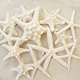 #2: Set of 12 Mixed White Starfish – Sizes Range From 2 to 3.5 inches to 4 to 5.5 inches – Tumbler Home Certified- Wedding Sea Shell Craft