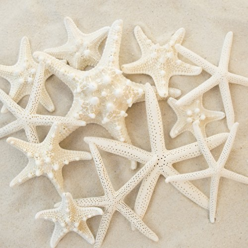 Set of 12 Mixed White Starfish – Sizes Range From 2 to 3.5 inches to 4 to 5.5 inches – Tumbler Home Certified- Wedding Sea Shell (Sand Wedding Invitation)