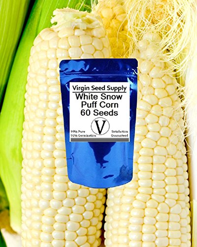 - Virgin Seed Supply White Snow Puff Corn 60 Count Seed Pack -Non-GMO Organic Heirlooom -Used in Soups, Stews, Corn on the Cob, Creamed Corn