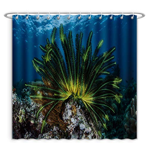 Aireeo Unique Custom Shower Curtains A Colorful Crinoid Clings To A Shallow Reef In Indonesia This Part Of The Tropical Pacific Harbors Polyester Fabric Shower Curtain For Bathroom, 60 x 72 Inches by Aireeo