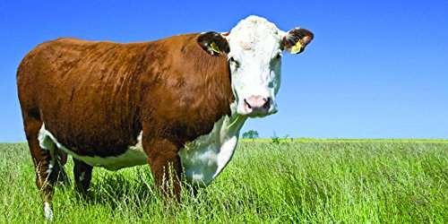Nature's Seed 1 Acre Great Plains Beef Cattle Pasture Blend