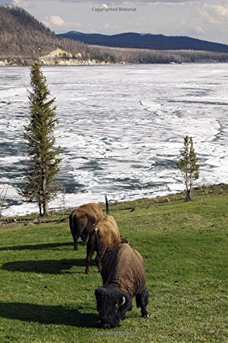 Bison in Yellowstone National Park Journal: 150 Page Lined Notebook/Diary pdf