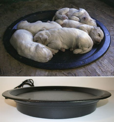 heating lamps dogs - 8