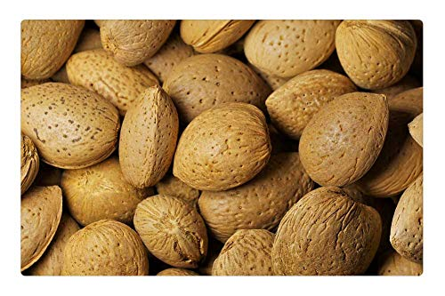 Almond Nibbles - Tree26 Indoor Floor Rug/Mat (23.6 x 15.7 Inch) - Almonds Nuts Nibble Food Delicious Shell