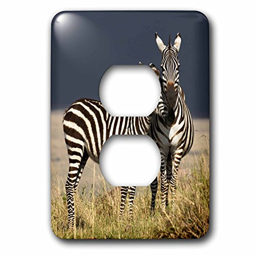 3dRose LLC 3dRose LLC lsp_131816_6 Burchells Zebra, Maasai Mara, Kenya - AF21 AJE0835 - Adam Jones - 2 Plug Outlet (Two Burchells Zebras)